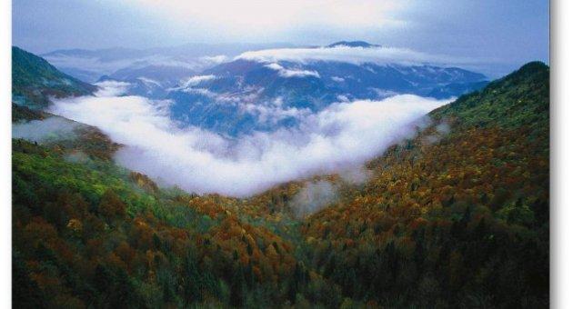 Karabük Ormanları İçin Önlem Alınacak mı?
