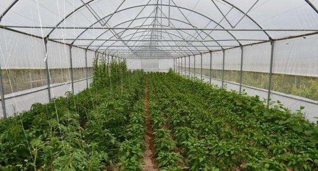 """Vali Gürel, """"Çiftçilerimizin ürünü bol, hasadı ve kazancı bereketli olsun."""""""